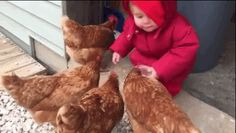 UH-OH! | This Video Of A Little Girl Face-Planting While Feeding Chickens Is Just Too Much