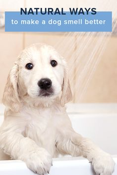 Natural Ways to Make a Dog Smell Better - Tap the pin for the most adorable pawtastic fur baby apparel! You'll love the dog clothes and cat clothes! Cute Puppies, Dogs And Puppies, Animals And Pets, Cute Animals, Dog Smells, Dog Care, Puppy Care, Dog Training, Training Schedule