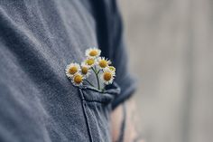 Pocket of tiny daisies (instagram: the_lane)