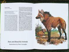 Ilustração do lobo-guará