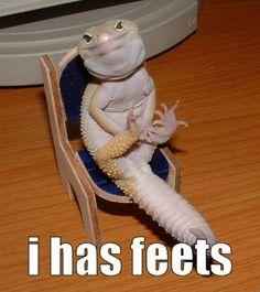 I has feets.