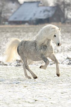 Beautiful Pony. #horse #equine http://globalhorsecents.com