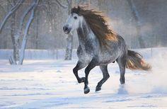 Snow Beauty Gosia Mąkosa Equine Art & Photography, Poland