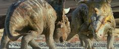 Pachyrhinosaurs from the Walking with Dinosaurs movie Prehistoric Age, Prehistoric Creatures, Dinosaur Movie, Walking With Dinosaurs, Rumble In The Jungle, Yellow And Brown, In The Flesh, The Past, Dinosaurs