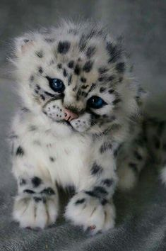 Reddit - aww - Leopard cub. So adorable and such a cutie patootie!