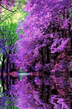 Красота природы - анимация на телефон №1246122