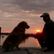 Dogs | PawPrints Furever
