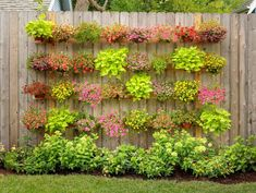 This vertical planter wall uses a wood fence as support. With a few boards,. - This vertical planter wall uses a wood fence as support. With a few boards, some wrought iron - Next Year, Landscape Structure, Walled Garden, What Do You Mean, Modern Garden Design, Back Gardens, The Fresh, Compost, Shrubs