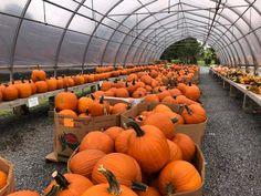 Grown in BaltCo: Chapel Hills Farm & Nursery