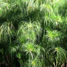 Interesting water greens