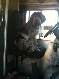Griffin in the FedEx truck