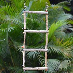 Lançamento! Conheça a Escada da Guaruba Toys. Ideal para aves como #agapornis #calopsita #ringneck . Compre através de nosso site www.guarubatoys.com.br #guarubatoys #aves #birds #birdtoys #enriquecimentoambiental #cockatiel #lovebirds #instapets #instabirds