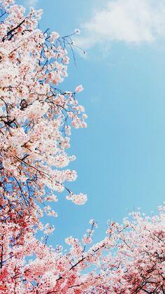 Pink cherry blossom around skyline 🌃 Ŧσllσฬ ๓є Ꮙαƪƪεȵα ღ Pink Blossom Tree, Cherry Blossom Background, Phone Backgrounds, Wallpaper Backgrounds, Iphone Wallpaper, Spring Wallpaper, Flower Wallpaper, Unusual Wallpaper, Pretty Wallpapers
