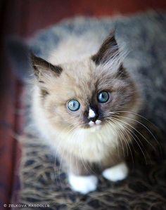 The most beautiful kitten!