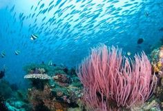 coral reef pictures - Bing Images