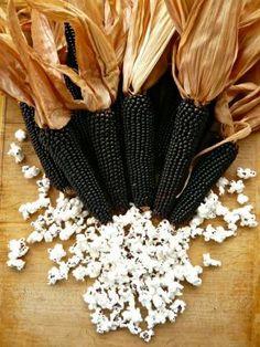 Dakota Black popcorn from Uprising Seeds. They grow this and it makes white popcorn. Fruit And Veg, Fruits And Veggies, Grand Popo, Rainbow Corn, Glass Gem Corn, Black Corn, Corn Vegetable, Popcorn Seeds, Organic Seeds