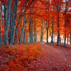 Order Forest Colours Wallpaper to create fantastic wall decor in your living space or browse thousands of other wallpapers at Print A Wallpaper. Order Now!!