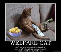 Welfare cat