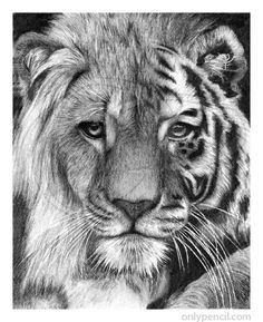 hey you could actually do that if you know how to draw a lion and a tiger then do the face in half ...... quite easy: