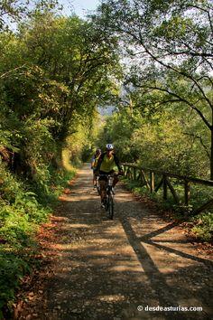 Senda del Oso Astruias. Rutas senderismo y btt por Asturias. [Más info] http://www.desdeasturias.com/la-senda-del-oso/