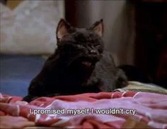 super ideas for funny cats quotes humor truths Cat Quotes, Film Quotes, Mood Quotes, Funny Quotes, Funny Memes, Hilarious, Salem Sabrina, Salem Cat, Salem Saberhagen