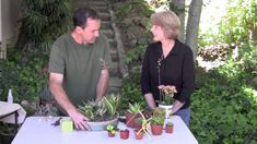 How to Make a Succulent Dish Garden for Indoors