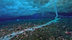 Icyunder water in Antartica