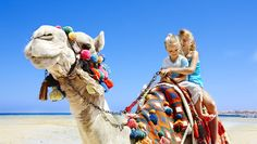 Tourists riding camel on the beach of Egypt. - Buy this stock photo and explore similar images at Adobe Stock Dubai Activities, Luxury Family Holidays, Clear Night Sky, Book A Hotel Room, Fun Deserts, Hotels, Before Sunset, Royalty Free Images, Egypt