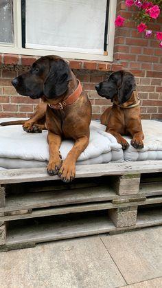 Seppl en Czoka Van, Dogs, Animals, Pet Dogs, Animales, Animaux, Doggies, Animal, Animais