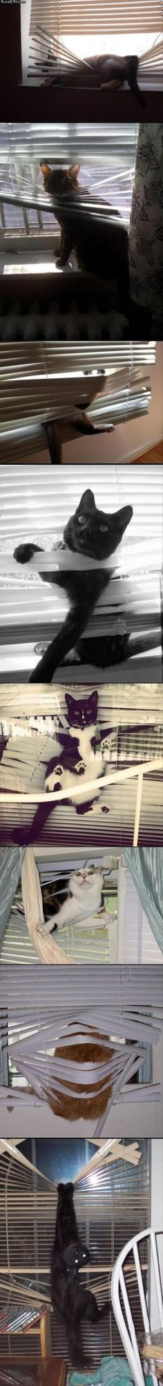 cats-love-blinds