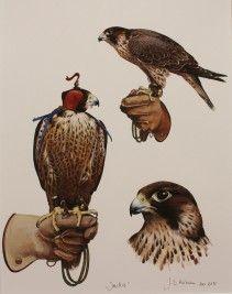 study of jackie Raptor Bird Of Prey, Birds Of Prey, Peregrine Falcon, Traditional Tattoo Flash, Fantasy Paintings, Animal Posters, Bird Illustration, Bird Species, Beauty Art