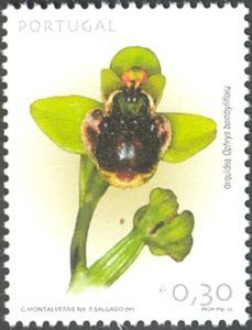Orchid:Ophrys Bombyliflora