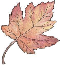 Resultado de imagen de hojas de arboles dibujos
