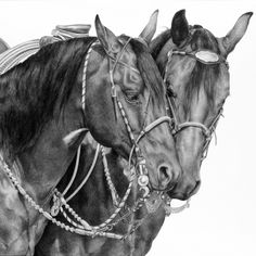 Horse Whispers – Horse drawing by Karmel Timmons