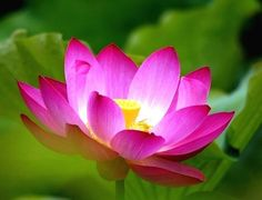 Lotus sketch love read this its brief things to try lotus sketch love read this its brief things to try pinterest lotus lotus flower and flower mightylinksfo