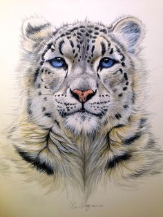 Snow leopard,painted by Jane Xu, water color art./雪豹,許寧水彩作品