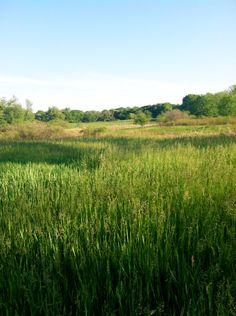 Rock Meadow, Belmont, MA  [Photo by C. Gates]