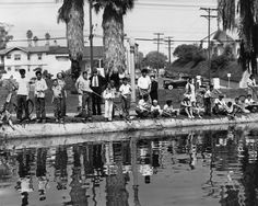 1949 echo park lake. Recently drained and refurbished. They found all sorts of interesting things at the bottom!