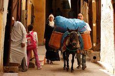 Morocco's Extraordinary Donkeys