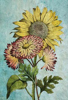 sunflower decor sunflower art sunflower gift botanical print sunflower kitchen decor sunflower print sunflower wall decor sunflower wall art #homedecor #sunflower #sunflowerprint #botanicalprint #floral #print #botanicalart #art #marygold #marygoldprint #flowers #floralprint #giclee