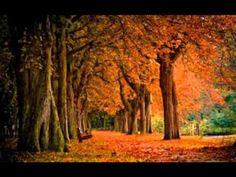 bosques de viena - Pesquisa Google