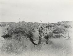Marc Aurel Stein - Tamarisk cones to north-east of N.XXXIX. (Chulam Ali). [Niya site.], 18 December 1913. (just tree) Photo 392/28(657) © British Library