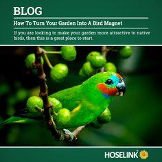https://www.hoselink.com.au/blog/how-to-turn-your-garden-into-a-bird-magnet/ Attracting native birds to your Australian garden.