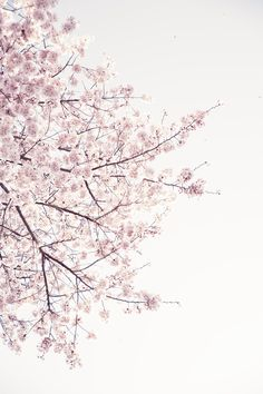 cherry blossom Art Print by neonwildlife Frühling Wallpaper, Flower Background Wallpaper, Flower Backgrounds, Wallpaper Backgrounds, Cherry Blossom Painting, Photo Deco, Blossom Trees, Cute Wallpapers, Phone Wallpapers