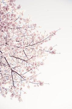 cherry blossom Art Print by Neon Wildlife | Society6