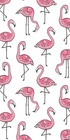 Iphone 8 Case Flamingos By Caja Design - Wallpaper Quotes Flamingo Wallpaper, Iphone Wallpaper Vsco, Cute Wallpaper Backgrounds, I Wallpaper, Pattern Wallpaper, Cute Wallpapers, Animal Wallpaper, Flamingo Painting, Flamingo Art