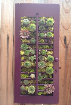 Succulent Vertical Garden in Vintage Window Shutter (SKINNY MINI) via Etsy