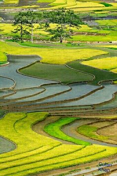 Fantastic view of rice terrace field's, Vietnam