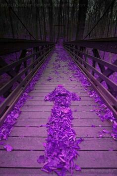 This way to purple paradise