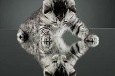 Οι γάτες προτιμούν την ανθρώπινη επαφή από την τροφή